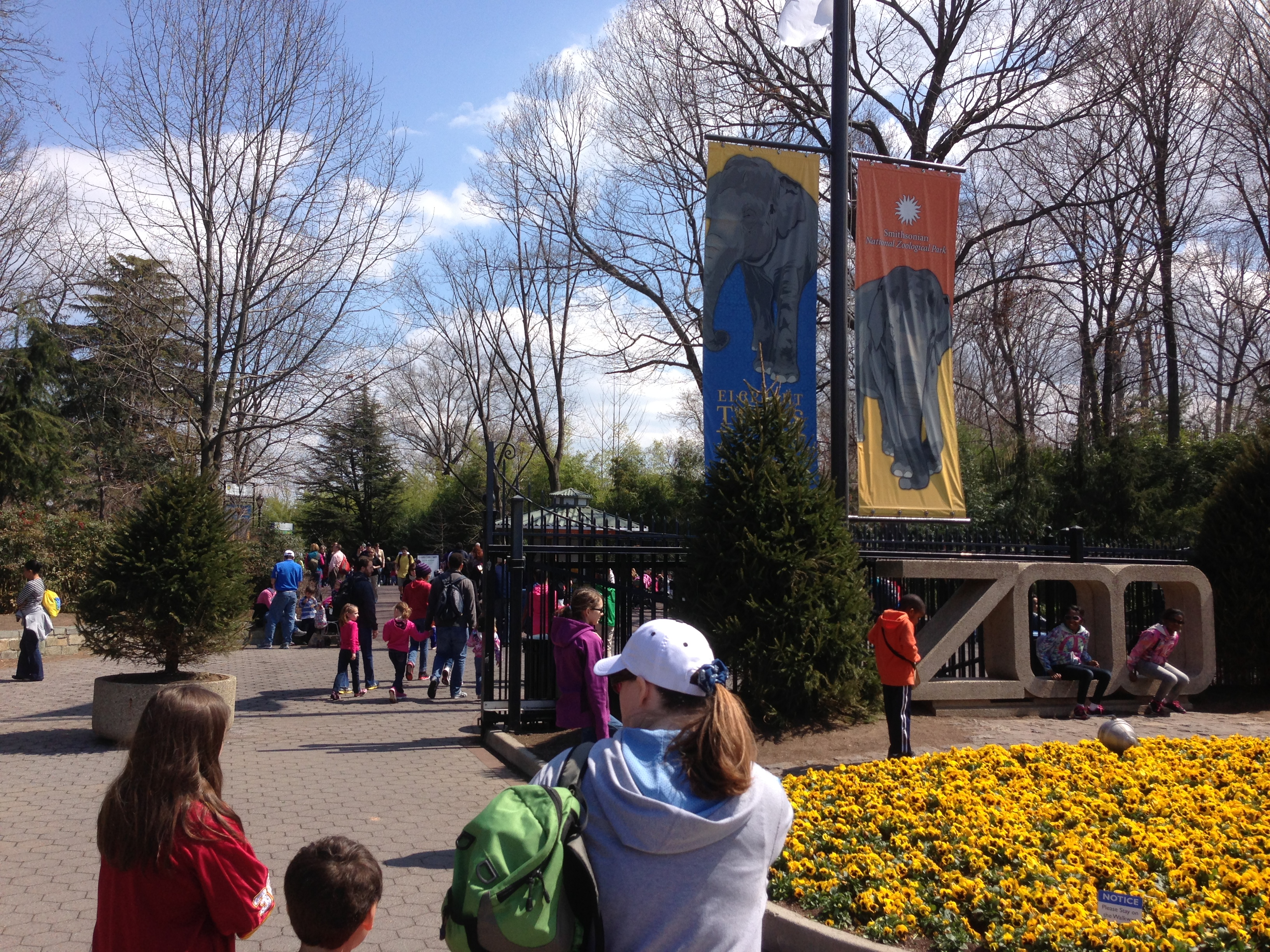 The National Zoo Goes Gorilla!!